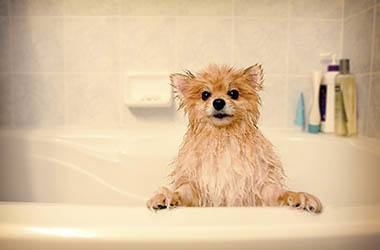 Animal Hospital bathing services in Virginia Beach