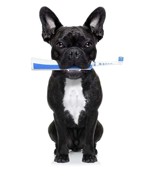 Pet dental care is important at Virginia Beach Animal Hospital