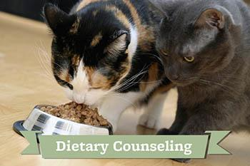 Pet diet counseling provided by Your Animal Hospital