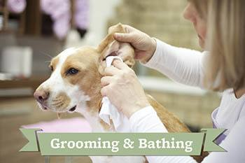 Grooming and bathing tips from Your Animal Hospital
