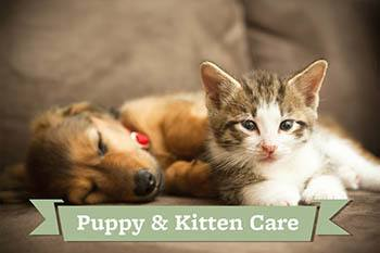 Puppy and kitty care at Your Animal Hospital