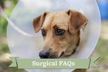 Find out about what the frequently asked pet surgery questions are at Your Animal Hospital