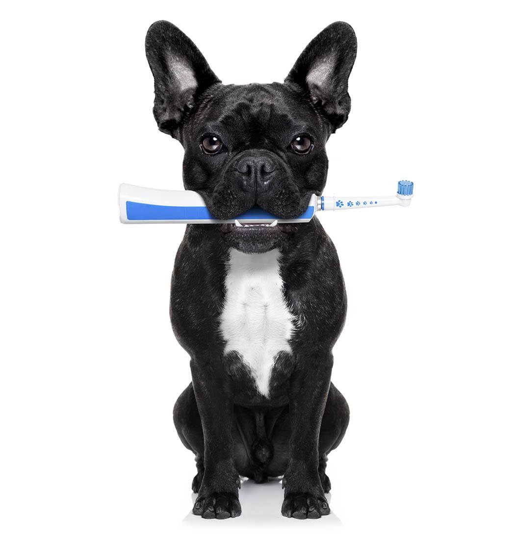 Pet dental care is important at Tucson Animal Hospital