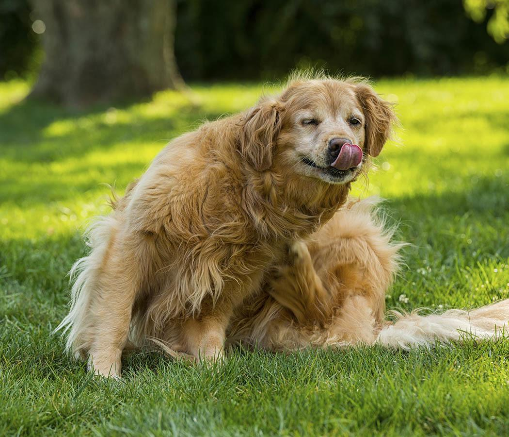 Animal Hospital offers Flea and Tick Control services in Tucson