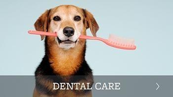 Pet dental care offered in Scottsdale